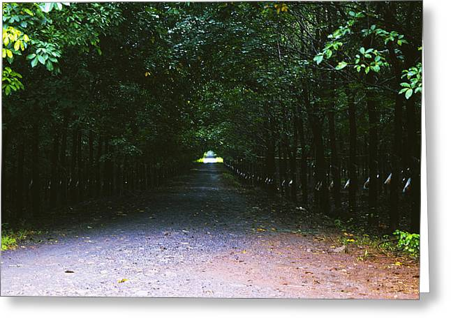 Man In The Wilderness Greeting Cards - Forest Path Greeting Card by Nguyen Truc