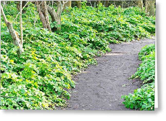Rock Spring Trail Greeting Cards - Forest path Greeting Card by Tom Gowanlock