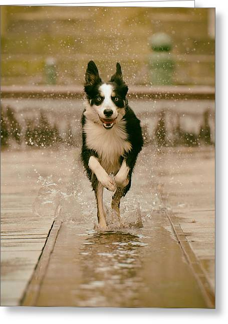Athletic Photo Greeting Cards - Fountain Frolic Greeting Card by Katrin Bellyeu