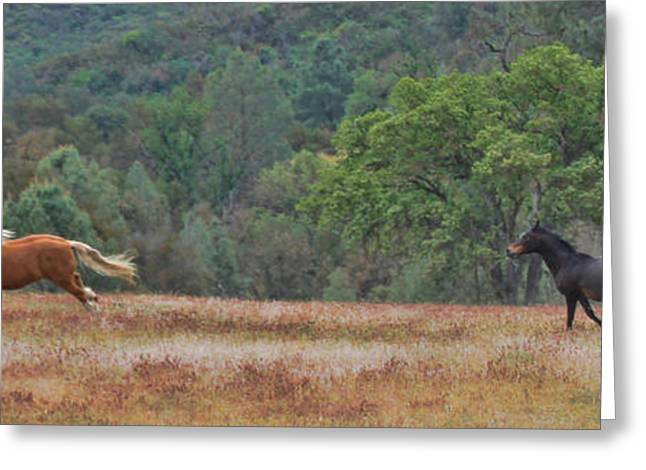 Beautiful Horse Photography Greeting Cards - Free Greeting Card by Stephanie Laird