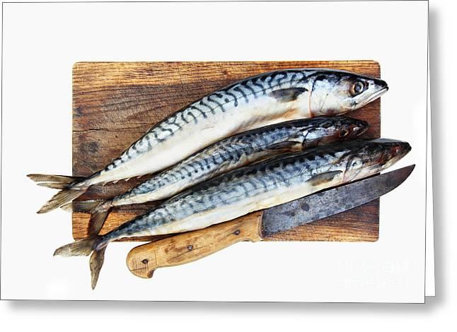 Sustenance Greeting Cards - Fresh mackerels Greeting Card by Michal Boubin