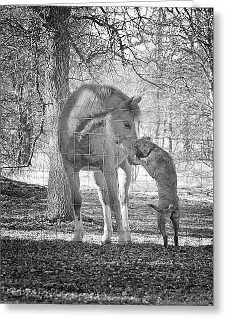 Love Between Dogs Greeting Cards - Friendship Greeting Card by Maria Jansson