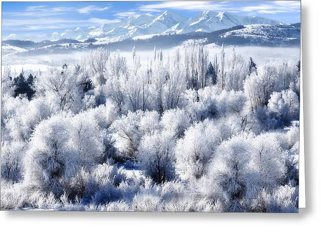 Foggy Day Greeting Cards - Frosted Trees in Ogden Valley Utah Greeting Card by Utah Images