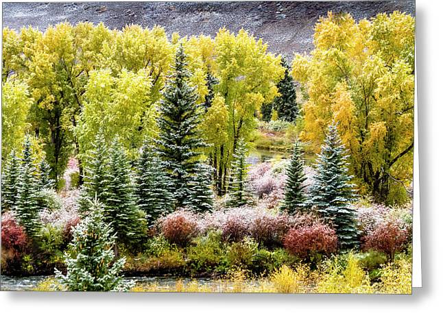 Frosty Autumn Morning Greeting Card by Teri Virbickis