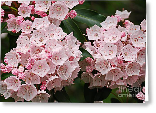 West Virginia Greeting Cards - Full Bloom Greeting Card by Randy Bodkins