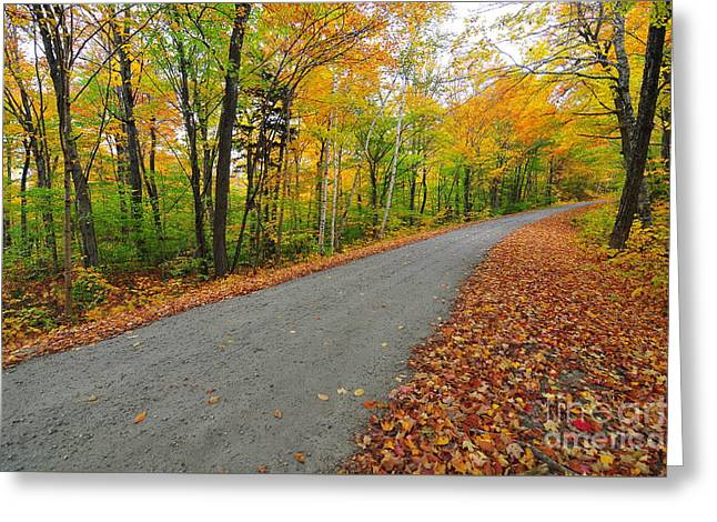 Gale River Road Greeting Card by Catherine Reusch  Daley