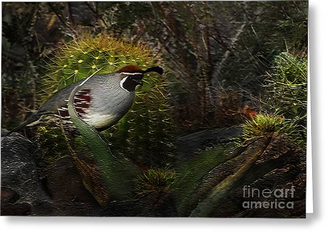 Exceptional Greeting Cards - Gambels Quail Greeting Card by Terril Heilman
