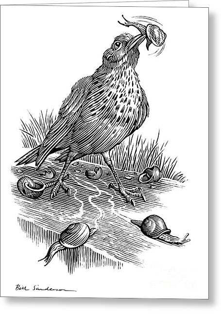 Linocut Greeting Cards - Garden Bird Catching Snails, Artwork Greeting Card by Bill Sanderson