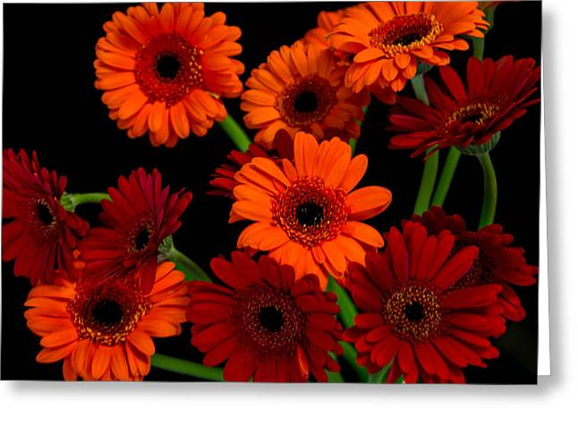 Squared Pyrography Greeting Cards - Gerbera Daisies3 Greeting Card by Olga Photography