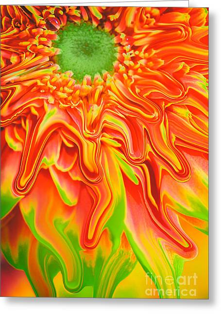 Flower Works Greeting Cards - Gerbera digital Greeting Card by SK Pfphotography
