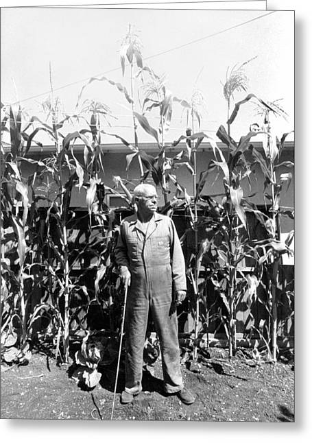 Giant Corn Man Greeting Card by Gerhardt Isringhaus