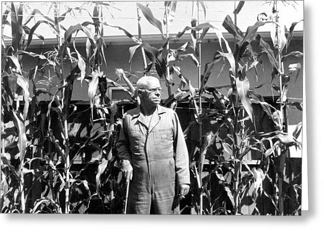 Giant Corn Man Greeting Card by Gerhardt Isringhaus