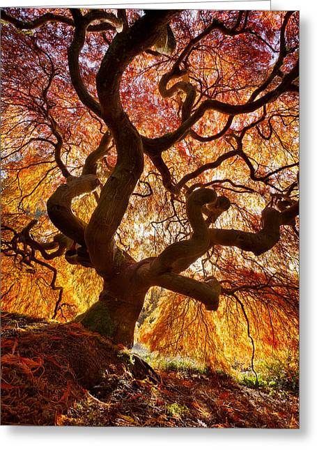 Glowing Canopy Greeting Card by Thorsten Scheuermann