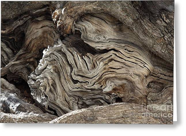 (olea Europaea) Greeting Cards - Gnarled Olive Tree Wood Greeting Card by Detlev van Ravenswaay