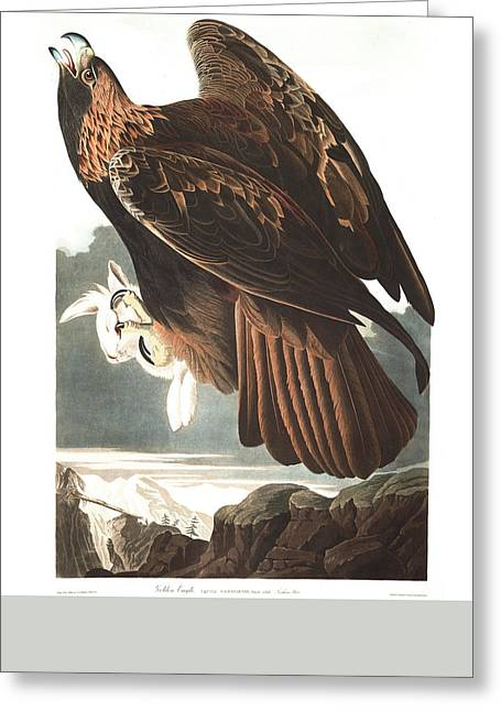 Eagle Feathers Greeting Cards - Golden Eagle Greeting Card by John James Audubon