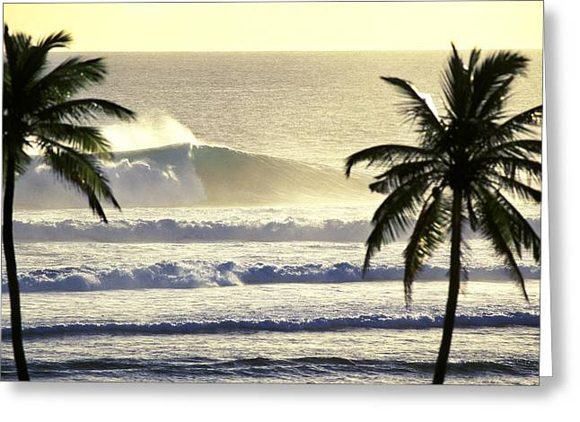 Coconut Palm Tree Greeting Cards - Golden Palms Greeting Card by Sean Davey