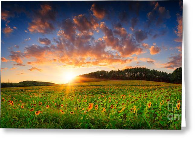 Maine Farms Greeting Cards - Golden sunset  Greeting Card by Emmanuel Panagiotakis