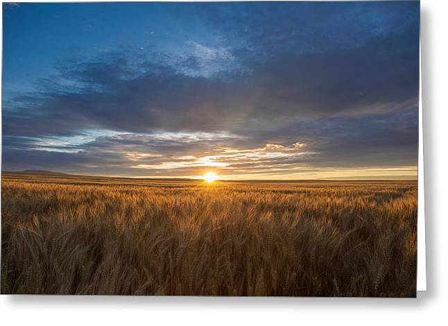 Prescott Greeting Cards - Golden wheat Greeting Card by Lynn Hopwood