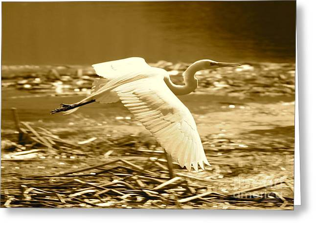 Flying Bird Greeting Cards - Golden Wings Greeting Card by Carol Groenen