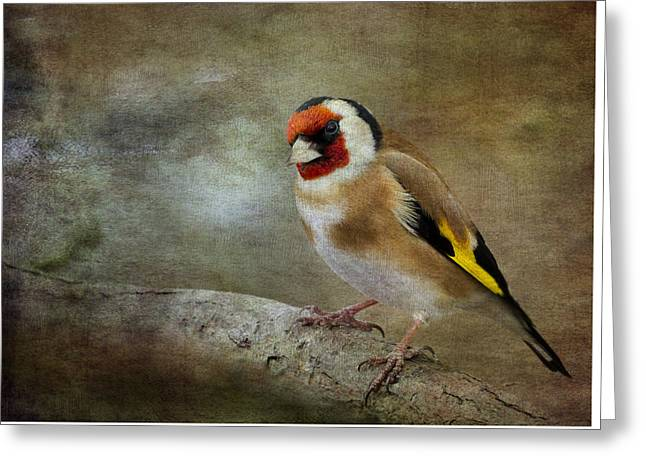 Goldfinch Digital Art Greeting Cards - Goldfinch Greeting Card by Chris Smith
