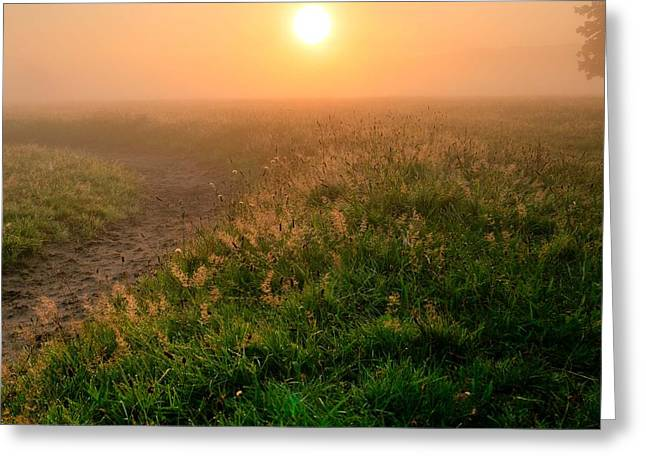 Haze Greeting Cards - Good Morning  #2 Greeting Card by Marie Schleich