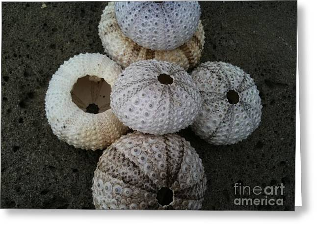Mayflower Beach Greeting Cards - Goree Texture - Coquille Greeting Card by Fania Simon