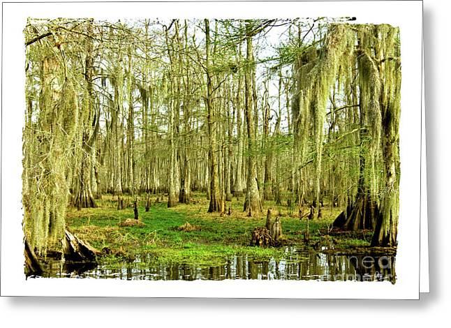 Moss Green Greeting Cards - Grand Bayou Swamp  Greeting Card by Scott Pellegrin