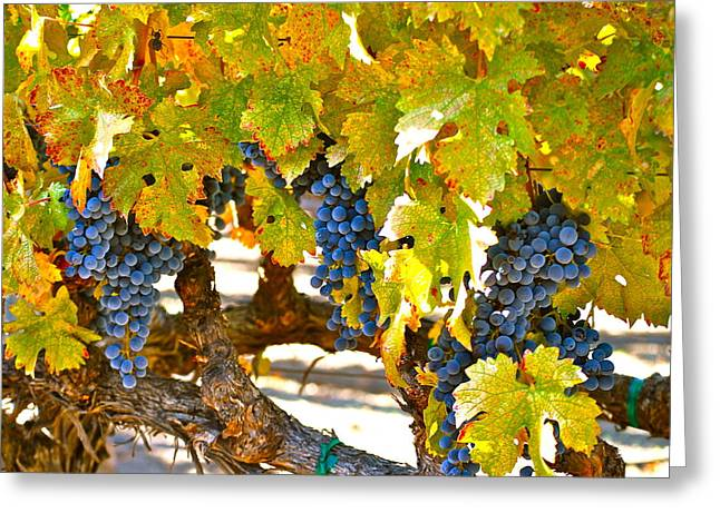Grape Vineyards Greeting Cards - Grapes Greeting Card by Dorota Nowak