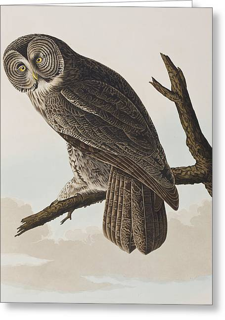 Great Drawings Greeting Cards - Great Cinereous Owl Greeting Card by John James Audubon