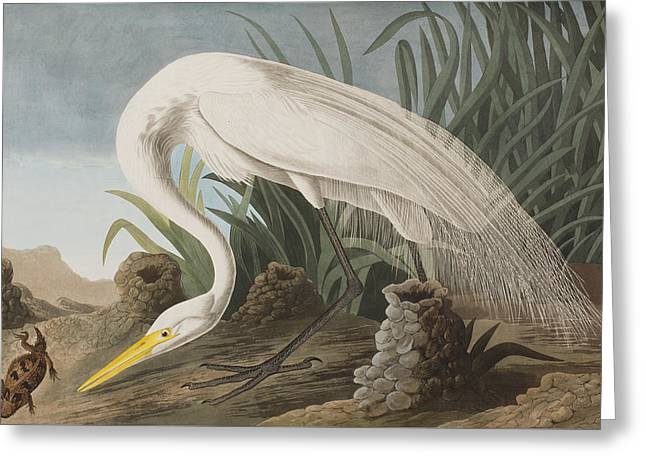 Egret Greeting Cards - Great Egret Greeting Card by John James Audubon