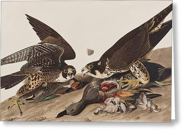 Great-footed Hawk Greeting Card by John James Audubon
