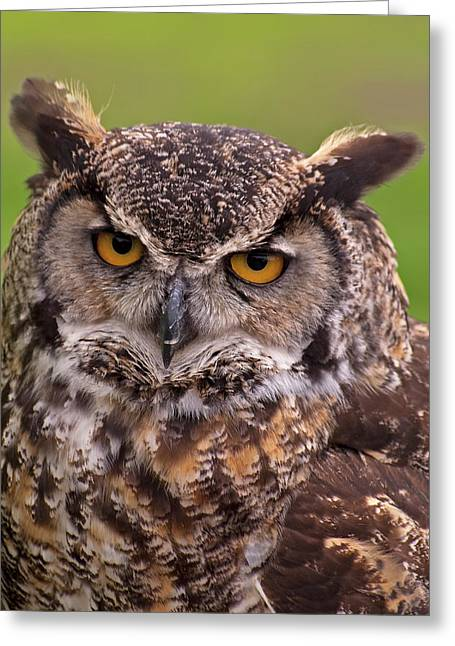 Owl Picture Greeting Cards - Great Horned Owl Greeting Card by Alexander Rozinov