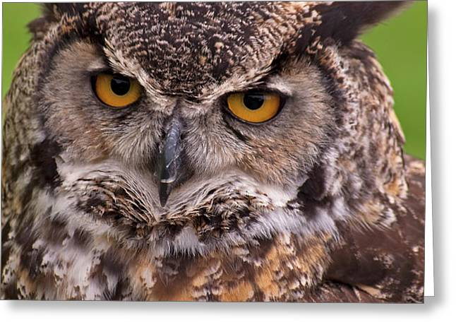 Great Horned Owl Greeting Card by Alexander Rozinov