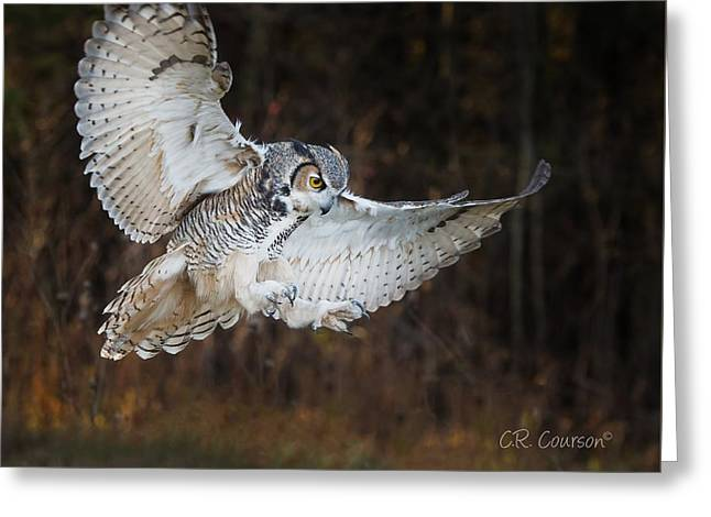 Great Horned Owl Greeting Card by CR Courson