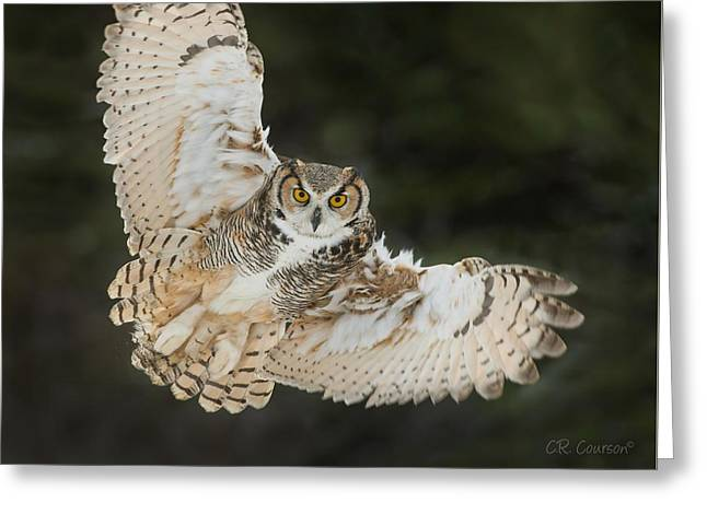 Great Horned Owl Wingspread Greeting Card by CR Courson