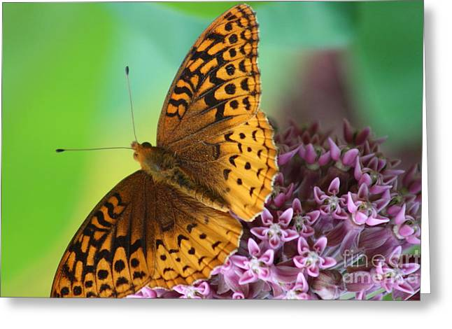 Flower Photos Greeting Cards - Great Spangled Fritillary Butterfly  Greeting Card by Neal  Eslinger