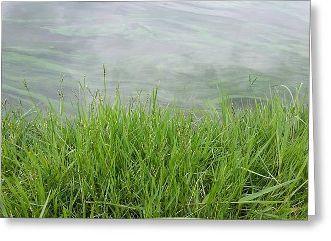 Alga Greeting Cards - Grass Greeting Card by Brant Safrit