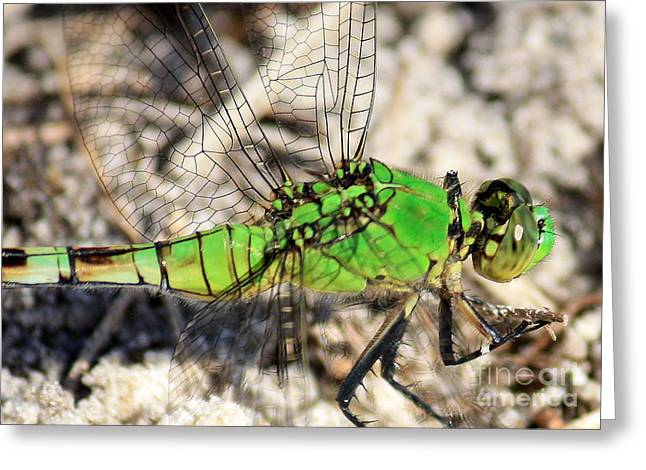 Dragonfly Macro Greeting Cards - Green Dragonfly Closeup Greeting Card by Carol Groenen