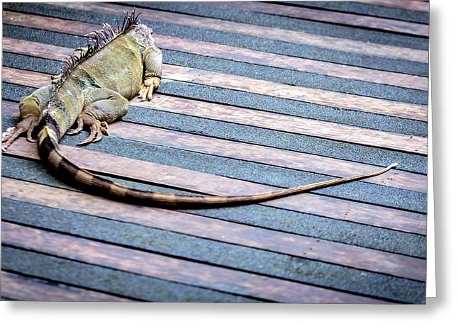Cut-outs Greeting Cards - Green Iguana Greeting Card by Jijo George