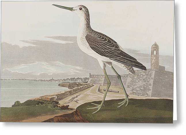 Ocean Shore Drawings Greeting Cards - Greenshank Greeting Card by John James Audubon