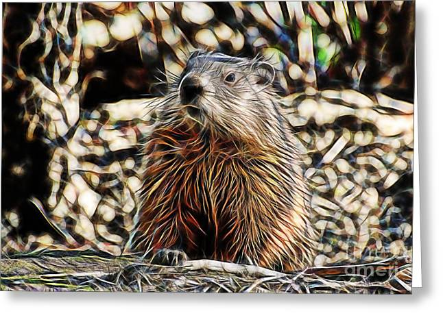 Mammals Greeting Cards - Groundhog Greeting Card by Marvin Blaine