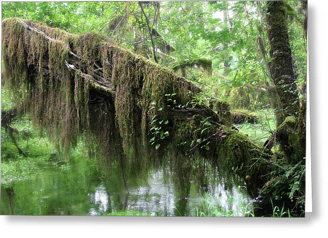 Moist Greeting Cards - Hall of Mosses - Hoh Rain Forest Olympic National Park WA USA Greeting Card by Christine Till
