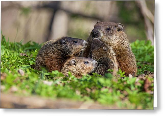 Happy Family Greeting Card by Mircea Costina Photography