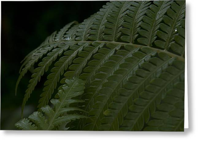 Ourjrny Greeting Cards - Hapuu Pulu Hawaiian Tree Fern  Greeting Card by Sharon Mau
