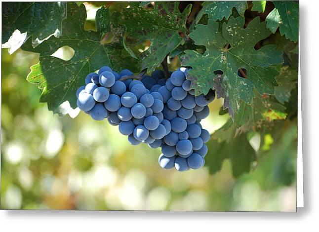 Grape Vineyard Photographs Greeting Cards - Harvest  Greeting Card by Dorota Nowak