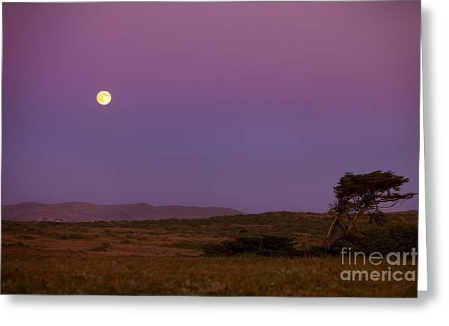 Big Sur Greeting Cards - Harvest Moon over Bodega Bay Greeting Card by Diane Diederich