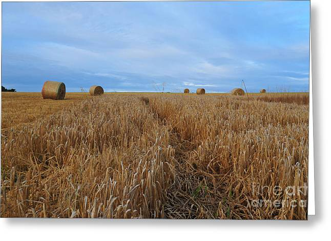 Bales Greeting Cards - Harvest Greeting Card by Stephen Smith