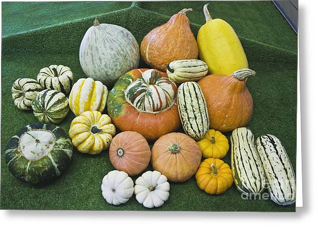 Mini Pumpkins Greeting Cards - Harvested Winter Squash Greeting Card by Inga Spence