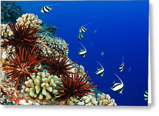 Swimmers Greeting Cards - Hawaiian Reef Scene Greeting Card by Dave Fleetham - Printscapes