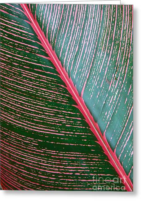 Peter French Greeting Cards - Heliconia Leaf Greeting Card by Peter French - Printscapes